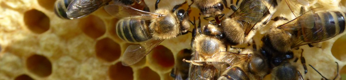 Stottercliffe Honey